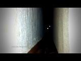 Кошачьи Ужасы по Стивену Кингу 2